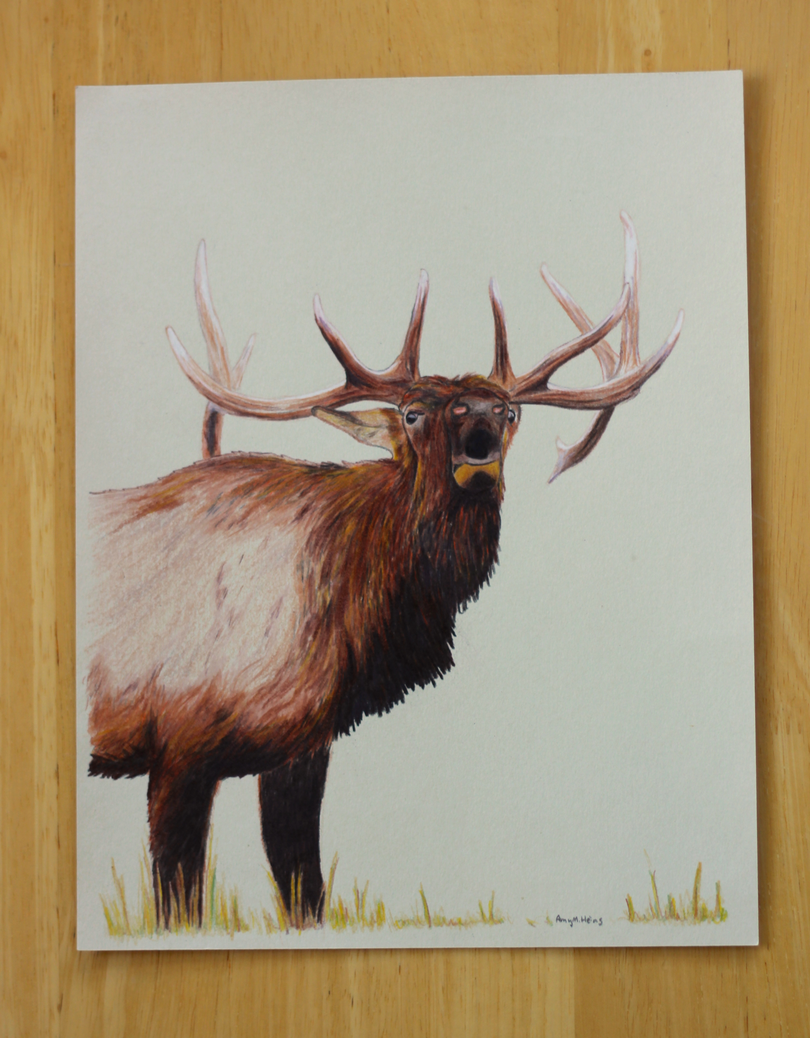 On Drawing Elk – The Urban Gingers